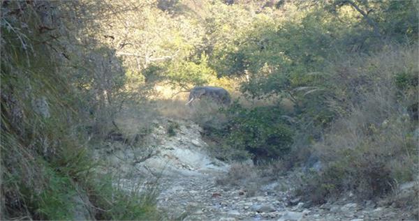 हरिद्वार में टस्कर ने ली एक और की जान,सीने पर पैर रखकर मार डाला