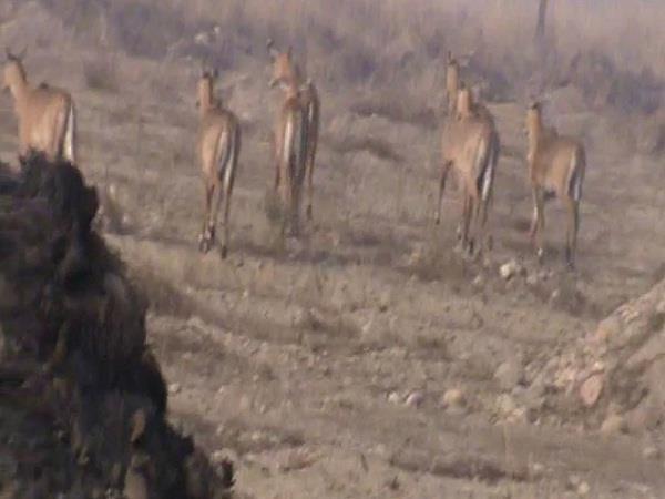 इस प्रयोग से खेतों का कुछ नहीं बिगाड़ पाएंगे जंगली जानवर, वन विभाग के DFO ने किया सिद्ध
