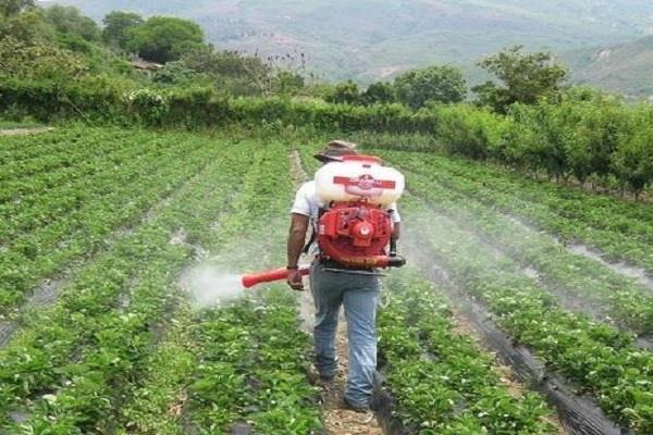 स्प्रे से सरसों की एक एकड़ फसल नष्ट, जांच की मांग