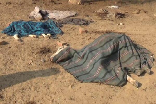 हर रोज सड़कों पर मर रहा गौवंश, गोहाना में बनाई गई 2 नंदीशाला