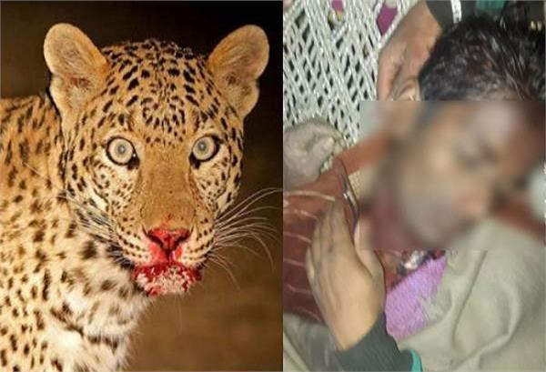 तेंदुए का कहर बरकरारः चारा काट रहे किशोर को जिंदा चबाया, मौत