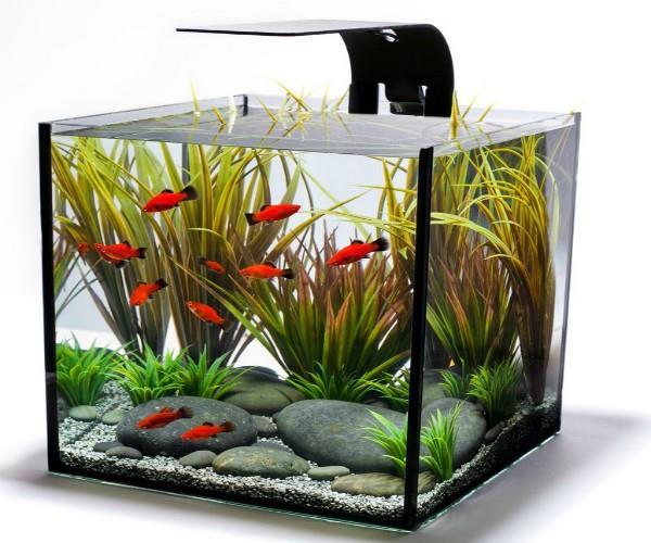 वास्तु: घर में Aquarium रखने से पहले जरूर जान लें ये बातें