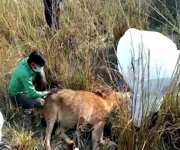 बेजुबान जानवरों को ऐसे दी गई मौत, जानिए आखिर क्या था इनका कसूर?