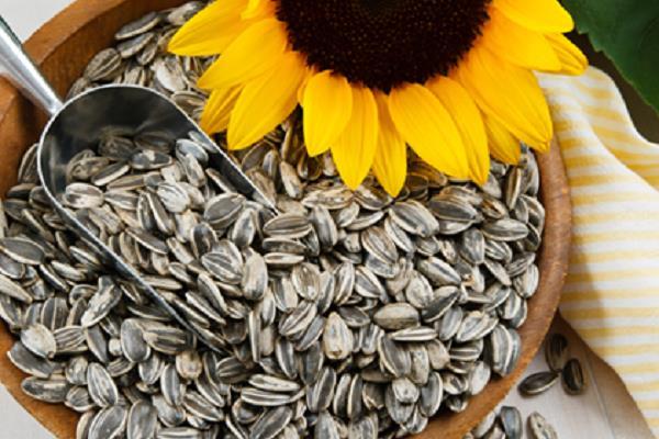 दिमाग को रखना हैं शांत तो ड्राई फ्रूट में खाएं सूरजमुखी के बीज