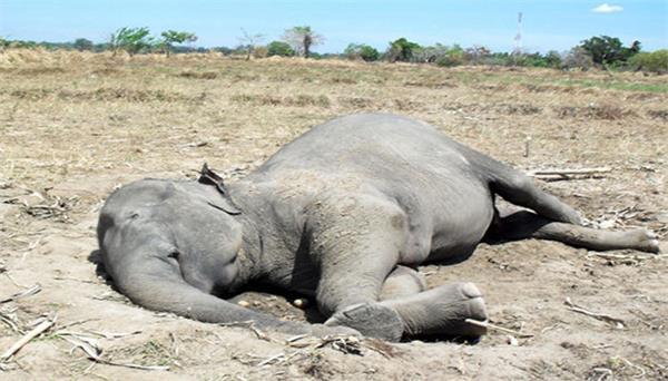 कार्बेट टाइगर रिजर्व फारेस्ट में मिला हाथी का शव