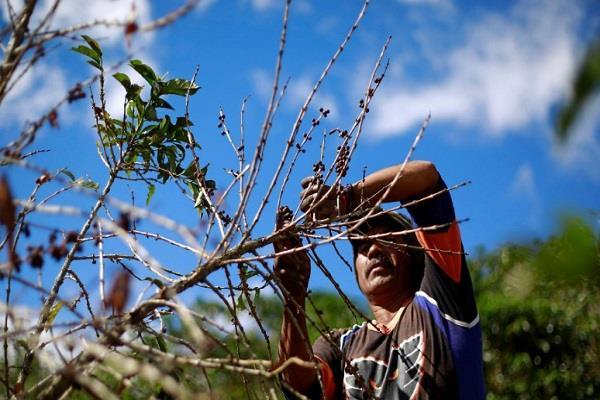 कोस्टा रिका में 30 वर्षाें बाद रोबस्टा कॉफी का होगा उत्पादन