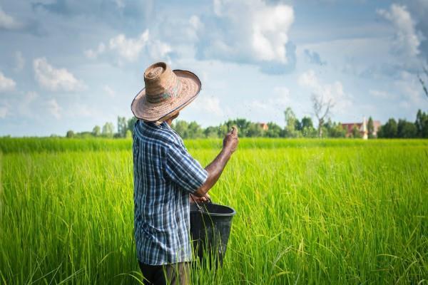 किसानों को जल्द मिलेगा खरीफ फसलों पर डेढ़ गुना MSP