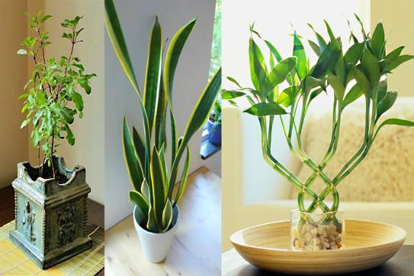 ये पौधे बनते हैं नुक्सान का कारण आज ही हटाएं