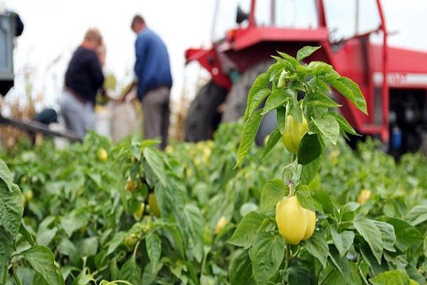 पिछले वर्ष की तुलना में इस वर्ष कृषि उत्पादन में गिरावट