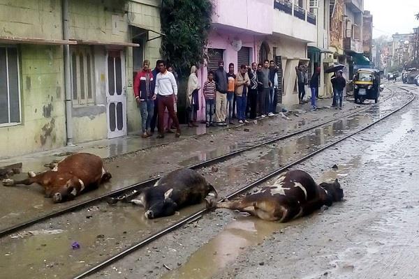 बारिश के बाद जमीन में आया करंट, 3 गऊओं की मौत