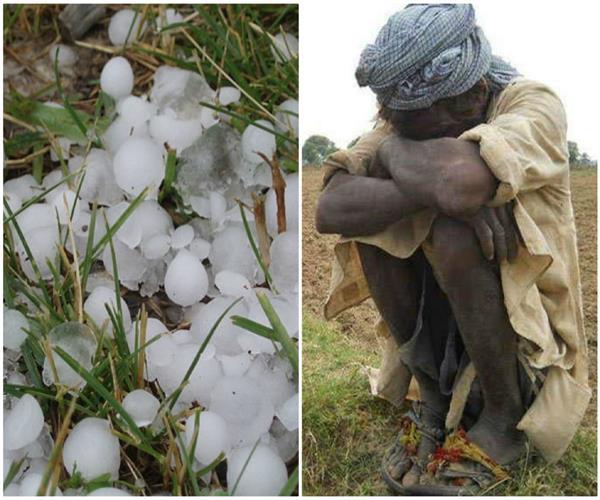 भारी अोलावृष्टि से फसलें हुई बर्बाद, सदमे से 2 किसानों की मौत