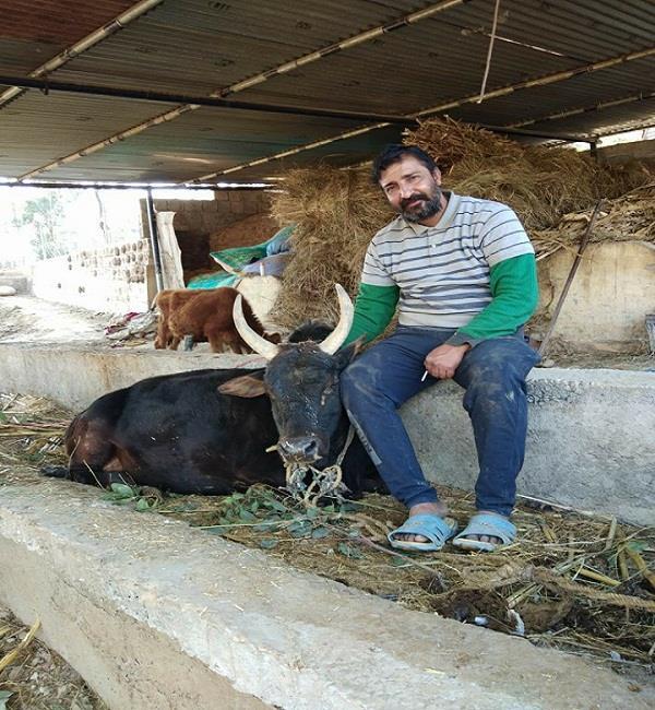 बिलासपुर का यह शख्स बेसहारा गौवंश के लिए बना मसीहा, छोड़ दी सरकारी नौकरी