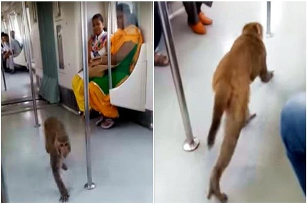 monkey takes a ride in delhi metro