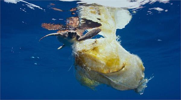 अतिसूक्ष्म प्लास्टिक विशालकाय  समुद्री जीवों के लिए खतरनाक