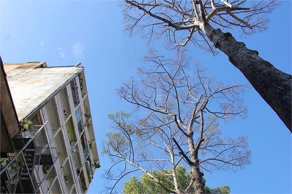 लोगों के लिए खतरा बन रहे सूखे पेड़ों की होगी कटाई