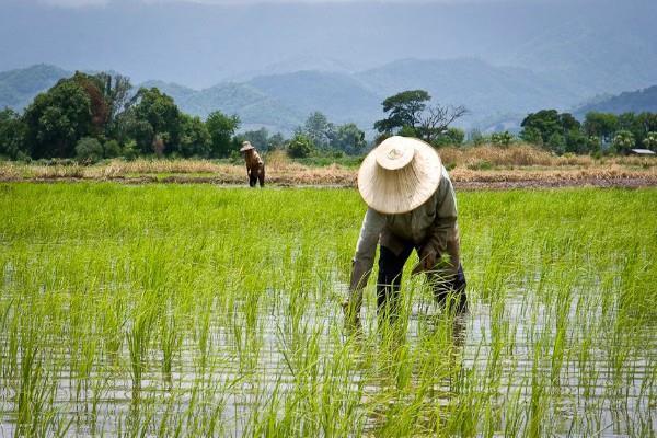 MSP के वादे को पूरा नहीं करने पर 2019 के चुनाव में सरकार बदल सकते हैं किसान