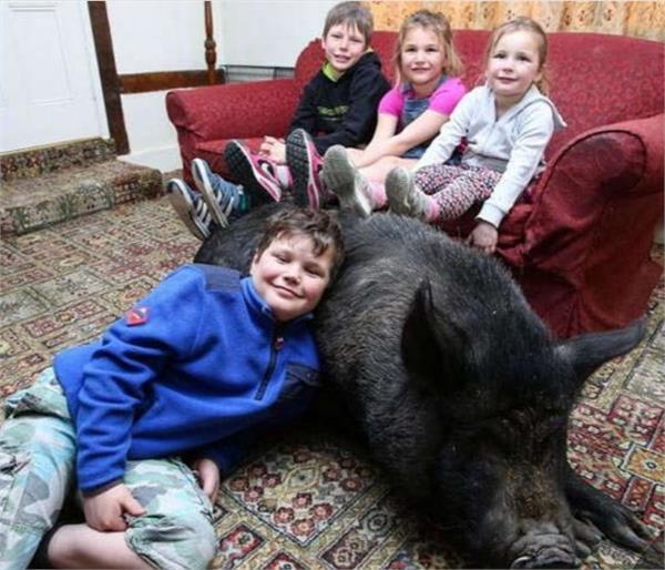 राह चलते बच्चे घर ले आए ये जानवर, अब ऐसे रहते हैं इसके साथ