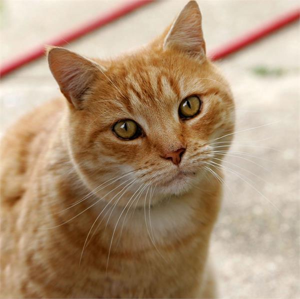 बिल्ली की Meow ने बचाई कपल की जान, नहीं तो हो जाते राख