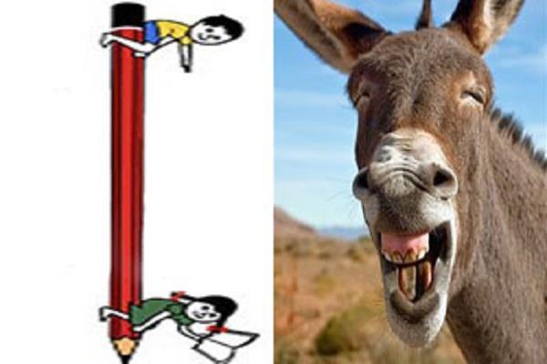 donkey became a brand ambassador of education awareness