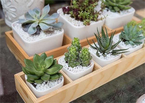 बेफिक्र होकर होम गार्डन में लगाएं ये पौधे, नहीं करनी पड़ती ज्यादा देखभाल