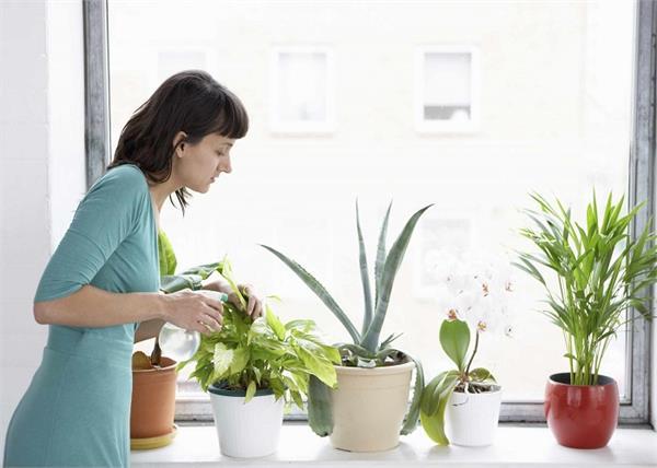 अगर आपको भी है सांस से जुड़ी प्रॉब्लम तो घर में ये पौधे लगाकर करें हवा को शुद्ध