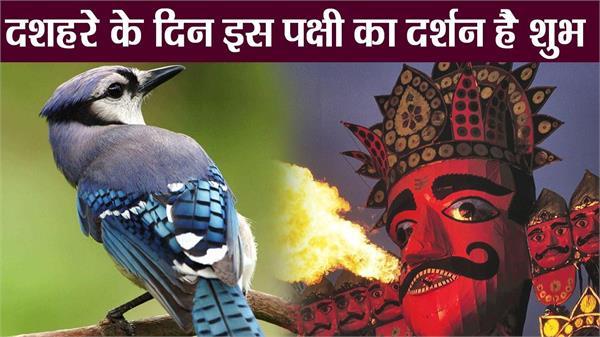 this bird is lucky on vijaya dashmi
