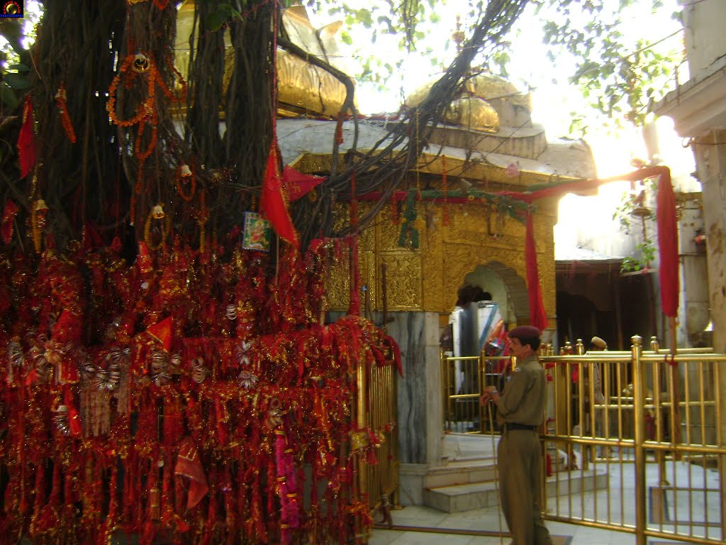 PunjabKesari chintpurni