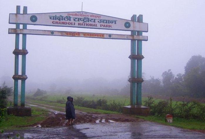 PunjabKesari Chandoli National Park