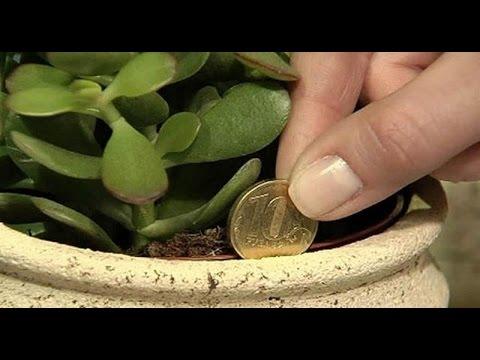 PunjabKesari, kundli tv, Crassula Plant image