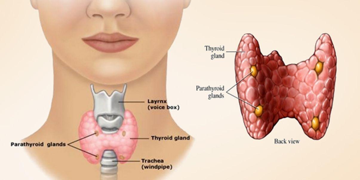 What is Thyroid disease?