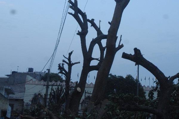 PunjabKesari, Environmental enemies slaughtered 100 trees
