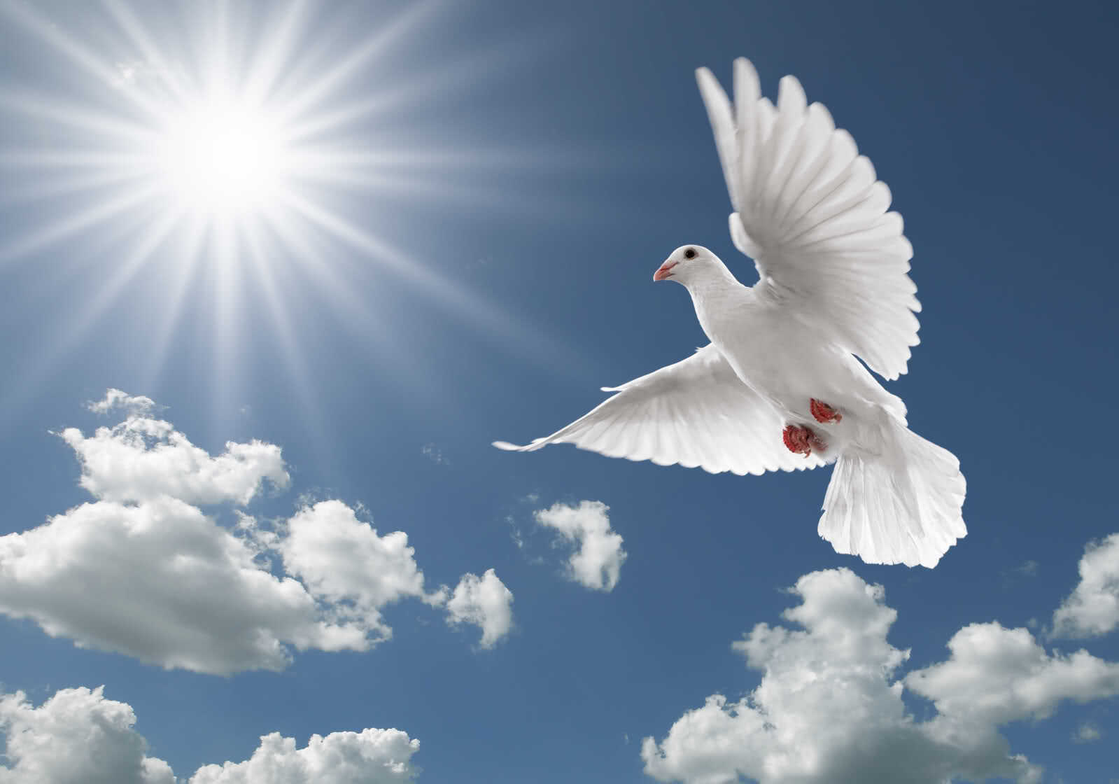 PunjabKesari International peace day 2019