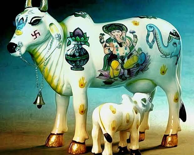 PunjabKesari, Cow, गाय