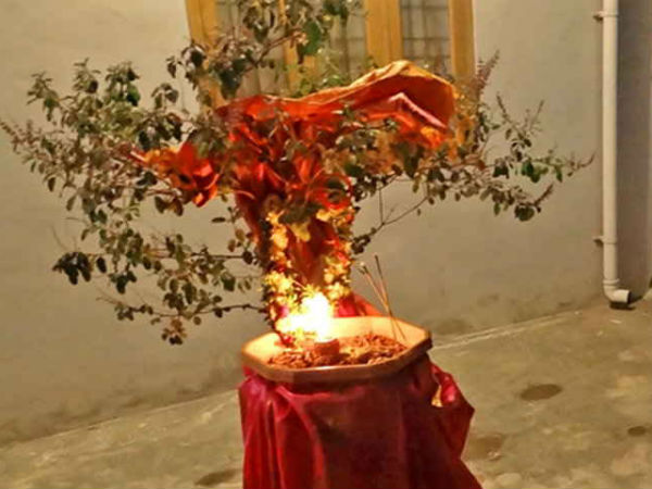 PunjabKesari, tulsi vivah