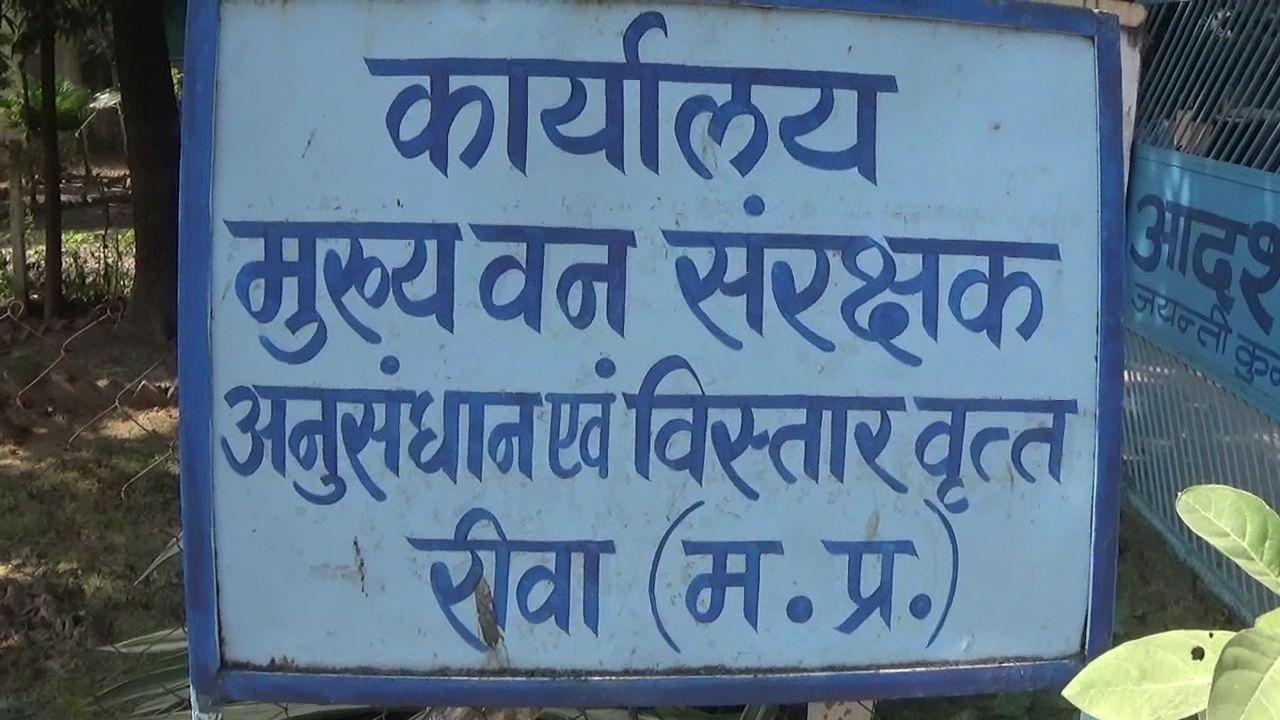 PunjabKesari, Dharam, Shyalkarni, Shyalkarni Plant, शल्यकर्णी नामक पौधा, शल्यकर्णी पौधा, Jyotish Vidya, Jyotish Gyan, Astrology In Hindi, ज्योतिषशास्त्र