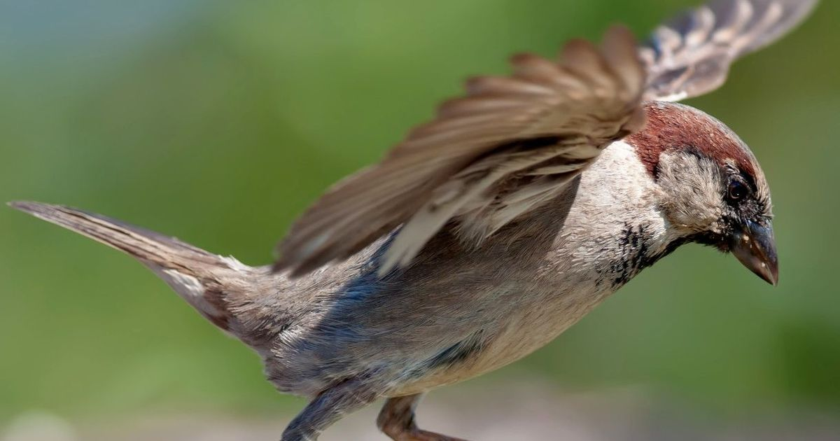 PunjabKesari, गौरैया, Sparrow, Sparrow Image
