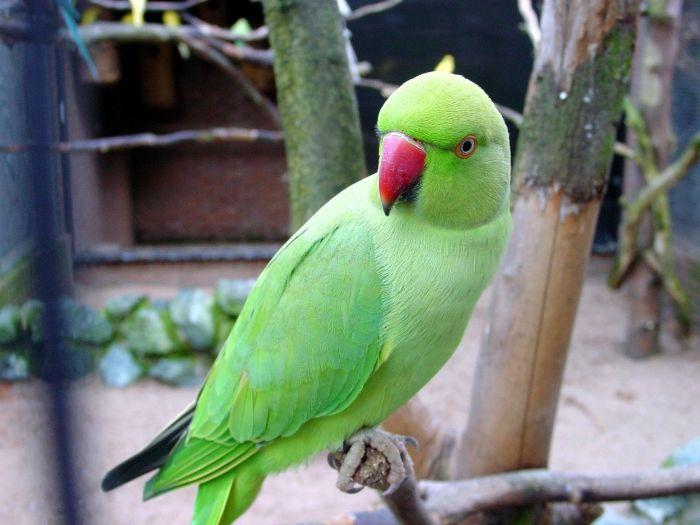 PunjabKesari, तोता, Parrot, Parrot Image