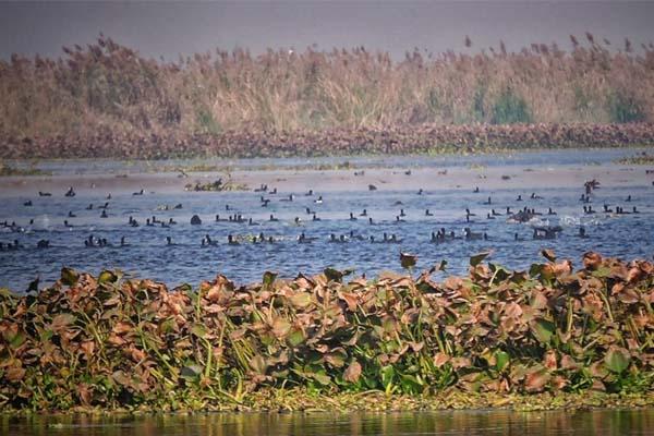 PunjabKesari, 6 Wetland of Punjab got title of International Wetland
