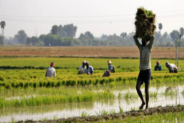 disappointment on the face of officials due to reduced market fees on paddy