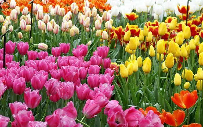 PunjabKesari, Flowers, फूल