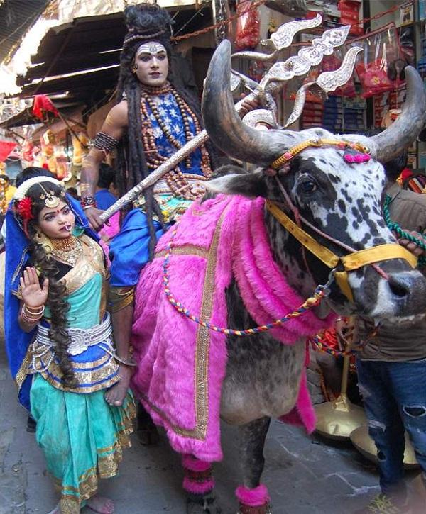 PunjabKesari, Jai Shankar Mandir Panjpir organized grand procession to celebrate Shivaratri