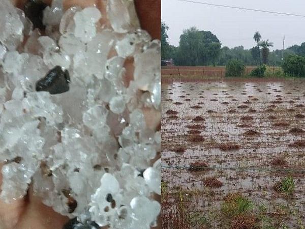 PunjabKesari, Madhya Pradesh News, Bhopal News, Shajapur News, Jabalpur News, heavy rain warning, hail, meteorological department, monsoon
