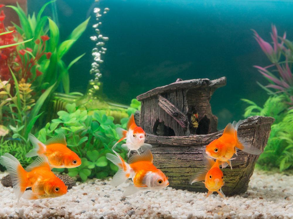 PunjabKesari, Fish Tank, Fish Iamge