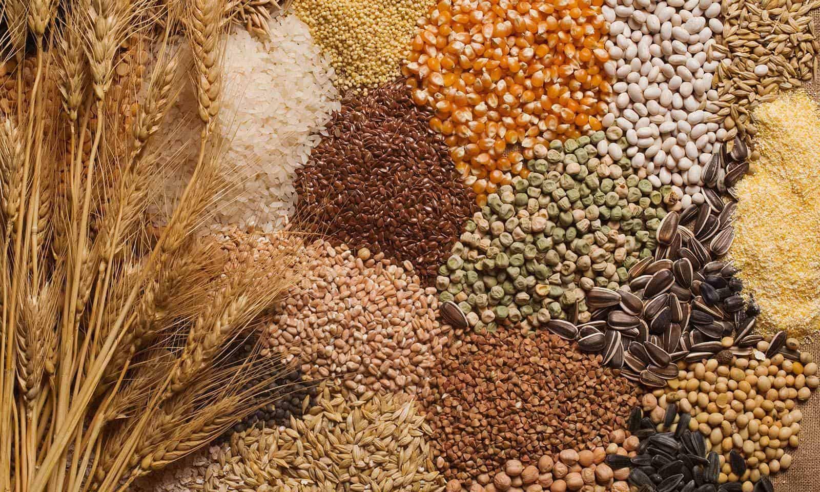 PunjabKesari, चने, जौ, बाजरा, अरहर, मूंग