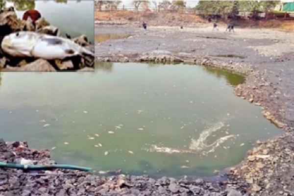 PunjabKesari,  Madhya Pradesh Hindi News,  Indore Hindi News,  Indore Hindi Samachar, Pond, fish, dead, poisonous water, municipal corporation