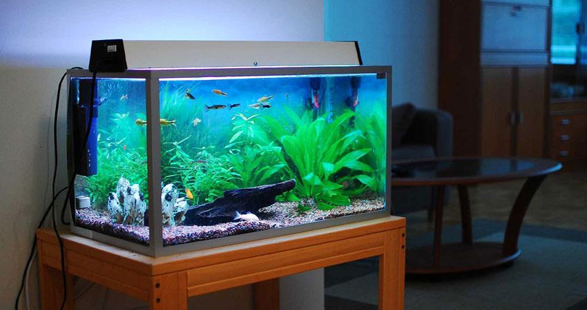 PunjabKesari, Aquarium, Aquarium connection with vastu shastra, Aquarium Image