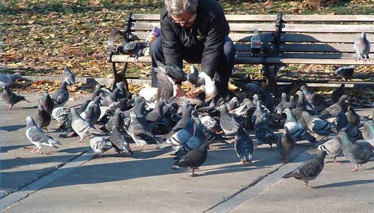 PunjabKesari, kundli tv, feeding pigeons image