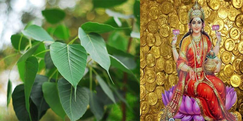 PunjabKesari Touch the peepal and see miracle