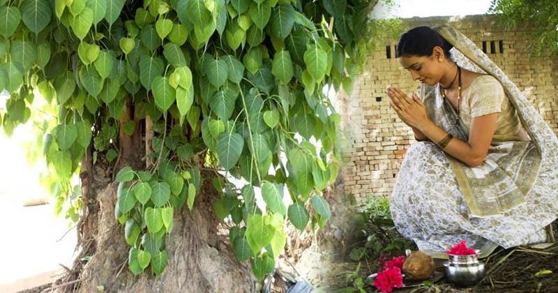 PunjabKesari, पीपल, पीपल की पूजा, Worship of peepal tree
