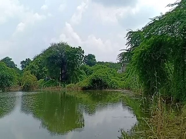 PunjabKesari, Madhya Pradesh News, Barwani News, Narmada Bachao Andolan, Sardar Sarovar Dam, submergence affected area, crops, Medha Patkar